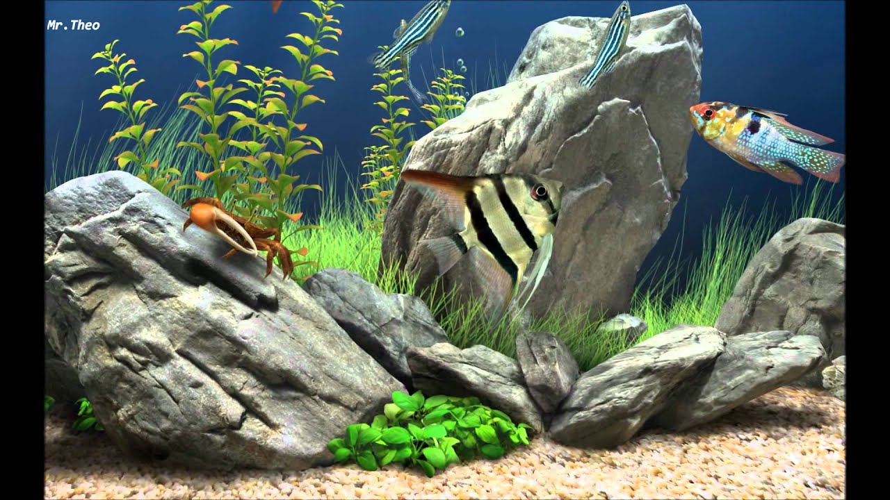 Dream aquarium screensaver hd youtube for Google fish tank mrdoob