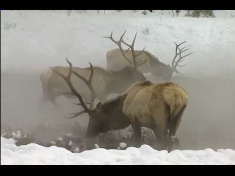Winter in Yellowstone DVD - National Parks X