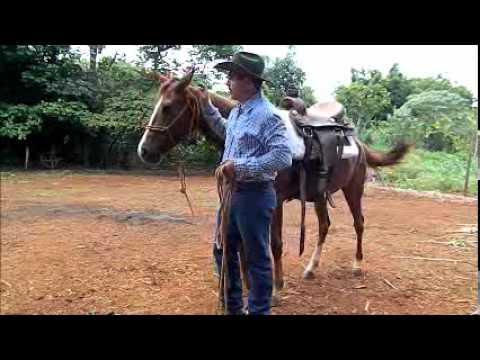Técnicas para montar em cavalos que pulam (corcoveiam) - Parte 01