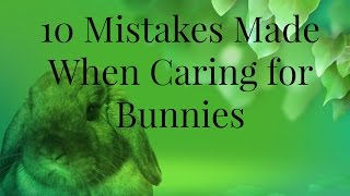 10 Mistakes Made When Caring for Bunnies