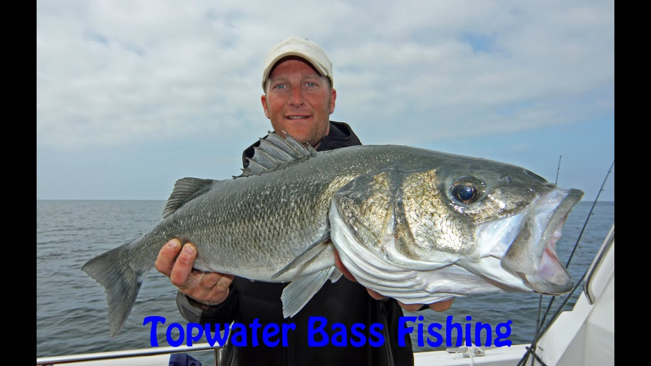 How to catch bass on surface lures fishing video by boat for How to catch bass fish