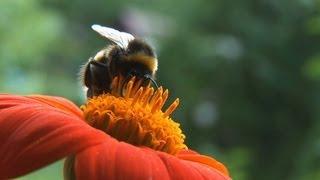 The Buzz About Pesticides - Nature