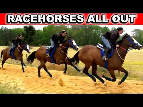 Race Horses Work Out. Training Thoroughbreds. ORB Kentucky Derby 2013