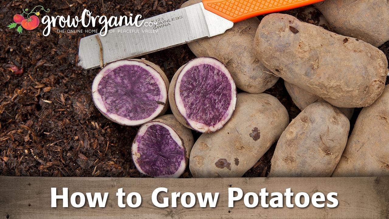 How to Grow Pot...