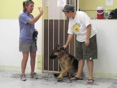 Villa La PAWS Training - High Anxiety Dogs