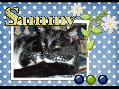 A Memorial for Sammy