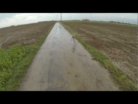Gopro Hero 3 Hund  Weimaraner beim Kommandotraining - Testaufnahmen Gopro Hero 3 Blackedition