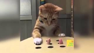 Beste lustige Katzen und Hunde 2018. Katze schlägt fehl, Hund nicht. Lustige Haustiere .