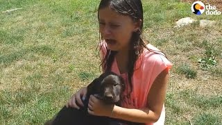 Kids React to New Dogs   The Dodo