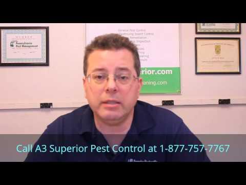New York City Bedbug Heat Treatment