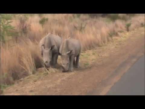 Rhino Close Up in Africa