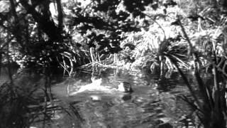 Tarzan 1934 Jane Nadando Nua (cena Cortada No Original