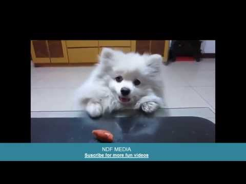 Funny Dog and a Sausage, the most funny dogs videos! Suscribe to my chanel!