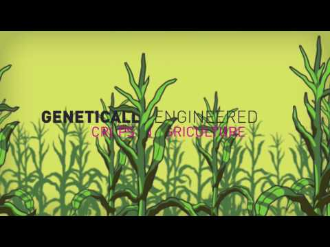 Is genetic engineering the worlds greatest scam