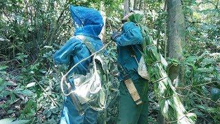 Mật ong rừng 2017: Hồi hộp chứng kiến cảnh ong rừng hung dữ bao vây thợ săn ong