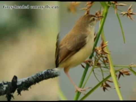 Bird Photography - Birds of Kerala