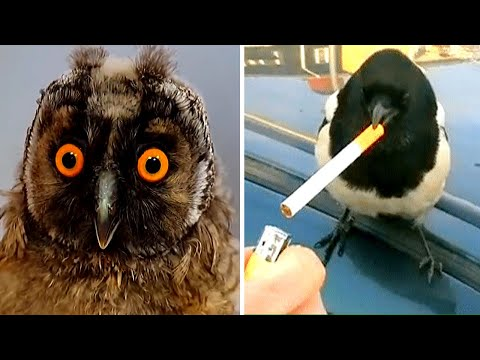 🔴Try Not To Laugh Challenge🔴   Funny bird videos awesome compilation 2020