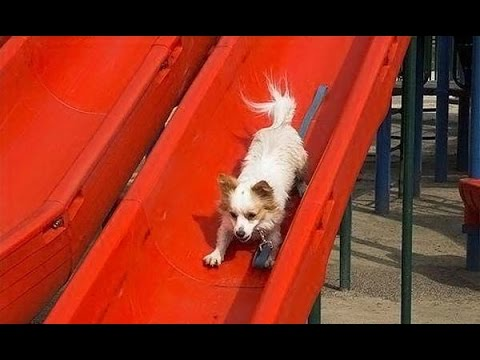 funny dogs playing on slides, they are so cute!