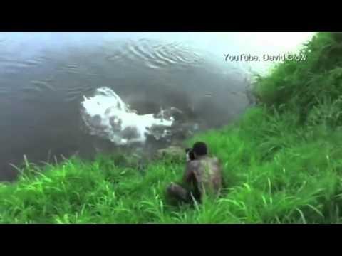 Kenhvideo.com- Nhiếp ảnh gia suýt bị cá sấu ăn thịt