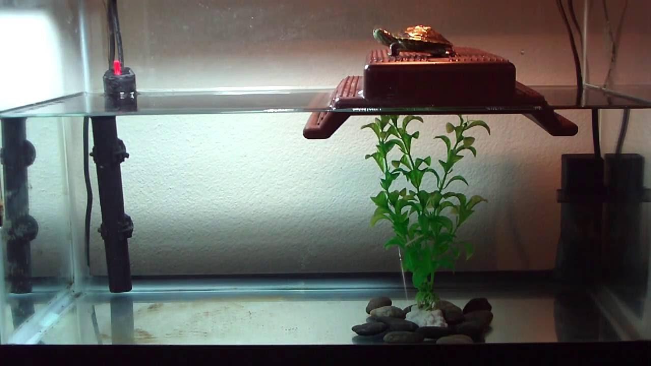 baby turtle tank HD 720p - YouTube