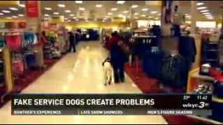 Fake Service Dogs Create Real Problems