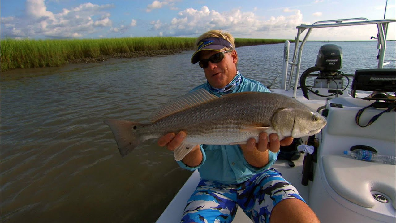 Low country reds redfish in charleston south carolina for Fish charleston sc