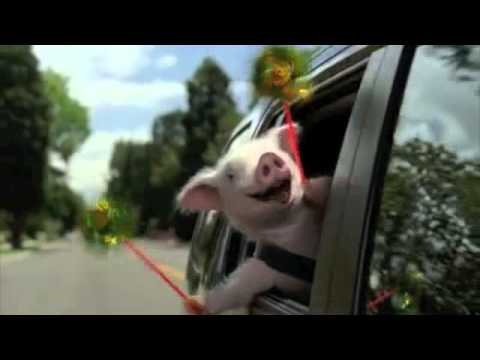 Geico Little Piggy Commercial - Extended