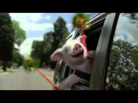Geico Little Piggy Commercial - Extended