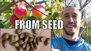 How To Grow An Apple Tree From SEED to FRUIT 🍎! In 3 YEARS!!