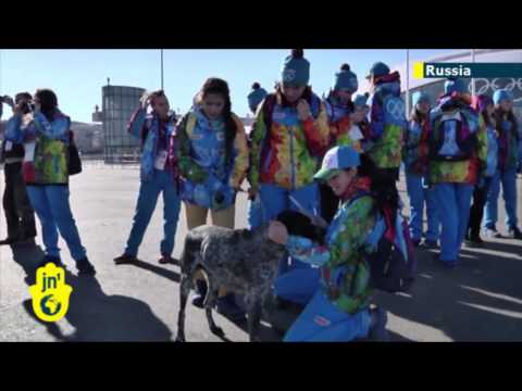 Olympic Dog Disposal: Sochi games organisers criticised for killing stray dogs