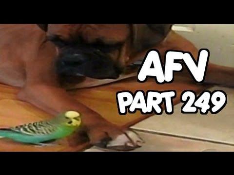 Home Videos - Part 249