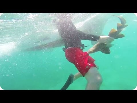 Jak se jen zbavit parazita - žraloka?! :D