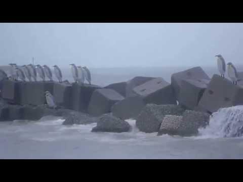 Pinguini e tempesta al lungomare