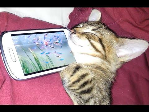 KITTEN LOVES IT'S NEW SMARTPHONE SAMSUNG GALAXY S3 MINI - CUTE