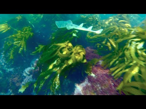Catalina Island Spearfishing 1-5-14