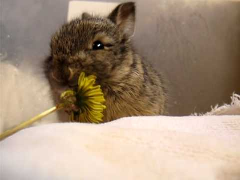 Baby Bunny Eats A Tiny Flower