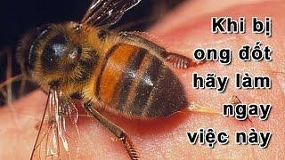Mẹo Vặt Cuộc Sống - Mẹo xử lý khi bị ong đốt