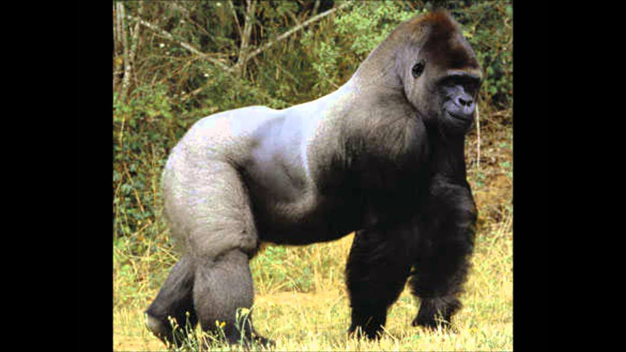 ... 20 of the Most Dangerous and Deadliest Animals in the World - YouTube Fattest Animal In The World