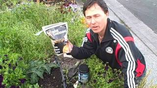 Grow Bigger, Healthier And More Food By Using Mycorrhiza