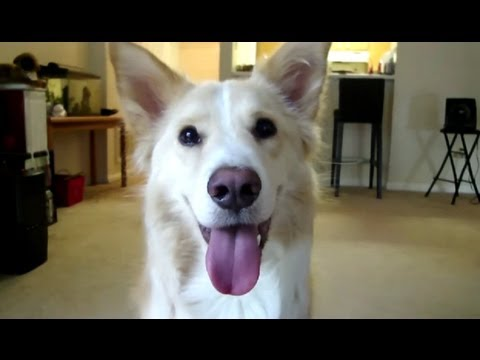 0 Dexters Adorable Dog Tricks!