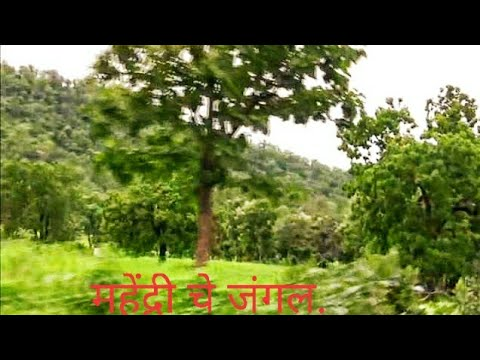 Mahendri  Forest to Satnur Jungle Road  by Dr Manohar Khode Amravati
