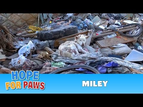 0 A homeless dog living in a trash pile gets rescued, and then does something amazing! Please share.