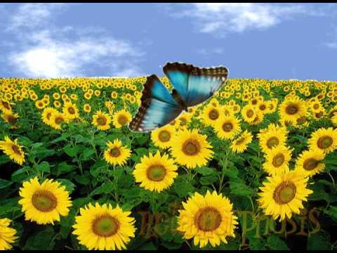 butterfly life cycle (metamorphosis) song