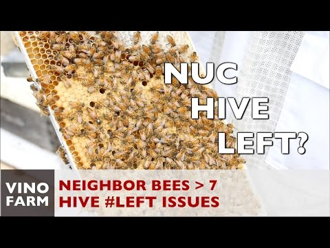 New Bees - Hive Left is not Right - Week 6
