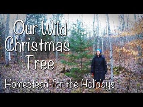 GGC - 72 - Hunting For A Wild... Christmas Tree!