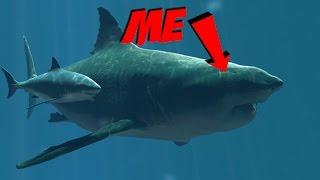 Q Significa Shark BATTLEFIELD 4 MEGALODO...