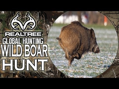 Wild Boar Hunting with Rugby Superstars!
