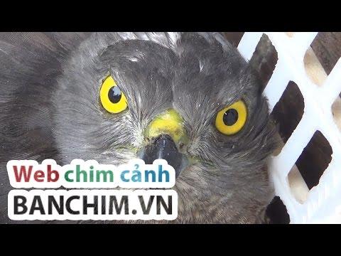 Phiên chợ chim Hoàng Hoa Thám - Hà Nội - Dốc Tam Đa - Bán cây cá chim cảnh