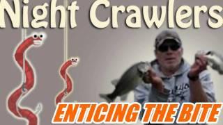 Fishing Nightcrawlers How To Entice The Bite