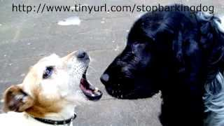 How To Train A Dog Not To Bark Part 1